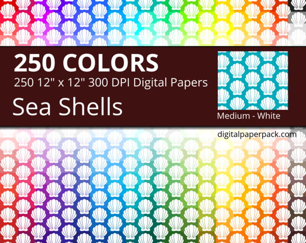 Medium white shells on colored background